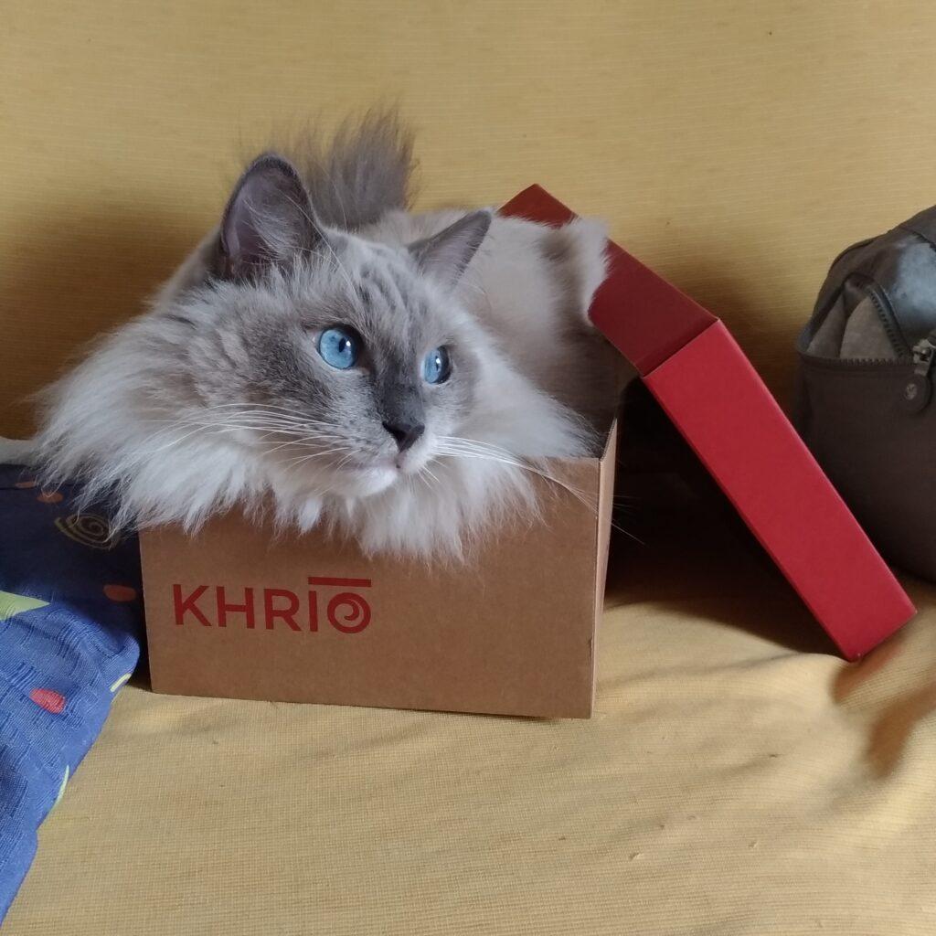 gatto ragdoll che simboleggia la passione per i Tarocchi e il pannolenci